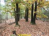 """2017-10-14      Doorn 35 Km    (25) • <a style=""""font-size:0.8em;"""" href=""""http://www.flickr.com/photos/118469228@N03/37451627360/"""" target=""""_blank"""">View on Flickr</a>"""