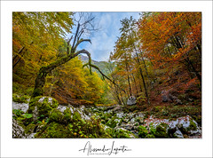 i t ' s   t i m e   t o   c o l o r s (Alessandro Laporta Photographer) Tags: colors colori autunno autumn alessandrolaporta laportaalessandro laporta fotocesco alessandrolaportaphotographer alessandrolaportaphotography