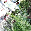 Fairies in the Garden - Just a bit of whimsy (MDawny72) Tags: garden rudbeckia rosemary chives hotlips flowers herbs fairies glitter sparkle mygarden myphotography getdirty playinthedirt autumn october 2017 whimsy whimsicalgarden whimsical mysecretgarden