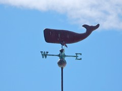 Whale With a Sense of Direction (mikecogh) Tags: henleybeach whale direction west east weathervane