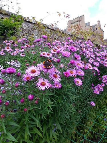 Butterflies at Crathes Castle