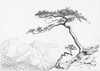 The pines (yuriye) Tags: yuriye pine crimea sudak novysvet rock stone mountain mother child pencil art creative realistic draw drawing painting судак новый свет рисунок карандаш реализм горы сосна станкевича tree academic
