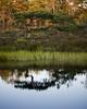 Hammarmossen I (Gustaf_E) Tags: forest hammarmossen hällefors kväll landscape landskap mosse myr naturreservat pine pines skog sommar sverige sweden tall tree träd västmanland woods