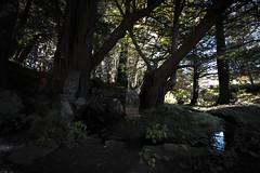 0344 (Shota Fukuda) Tags: 日本 japan 岩手県 遠野 神社 shintoshrine 早池峰神社