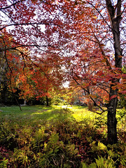 Autumn 1 (Stan's Gallery) Tags: autumn autumnal leaves fall colors trees sunlight ferns branches foliage