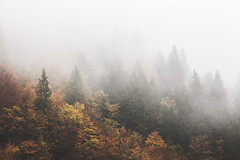 no sleep but dreaming all day (STEPtheWOLF) Tags: nature morning autumn fall colors textures fog mist tree forest woods austria styria hochschwab canon 5d3 stepthewolf