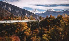 The bridge (VandenBerge Photography (and we're back again)) Tags: sigriswil alps mountains autumn forest trees bridge suspensionbridge season perspective berneseoberland switzerland europe canyon canon eos80d niederhorn jungfrau village sky clouds