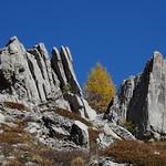 Mélèze et rochers thumbnail