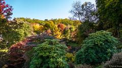 Arboretum de la Sédelle - Crozant - Creuse - Nouvelle-Aquitaine - France (vanaspati1) Tags: arboretum de la sédelle crozant creuse nouvelleaquitaine france vanaspati1 nature jardin garden collections