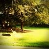 (sftrajan) Tags: botanicalgarden strybingarboretum sanfranciscobotanicgarden goldengatepark sanfrancisco jardinbotanique jardinbotanico botanicgarden botanischergarten botaniskhave ботаническийсад
