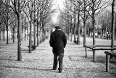 Promenade (Mathieu HENON) Tags: leica m240 noctilux 50mm noirblanc blackwhite monochrome france paris errance parisien jardin luxembourg parc