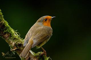Robin (Explored 16 October 2017)