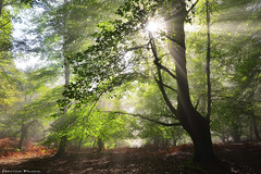 Lights of the Forest (Hector Prada) Tags: bosque otoño hojas árbol luz niebla bruma contraluz hayedo magico forest autumn fog mist leaves light tree morning woods dreamy sunbeams paisvasco basquecountry
