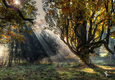 Autumn (Ruinenvogel) Tags: herbst hdr herbstzauber autumn laub nebel