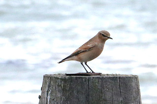 Bird on groyne 2