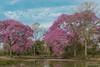 (..Javier Parigini) Tags: brazil brasil br matogrosso pantanal pantanal2017 poconé pocone traspantaneira naturaleza nature paisaje d800 2470mm f28 javierparigini flickr astic colours scenery n wildlife wildlifephotography vidasalvaje