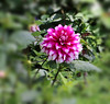 Flowers and Colours (Balaji Photography - 4.3 M Views and Growing) Tags: flower flora flowers flowermacro floraandfauna flowering garden gardenflower kodaikanal india travel colours colourful colors colour colorful