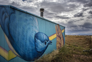 bluebird barn by Chip Thomas