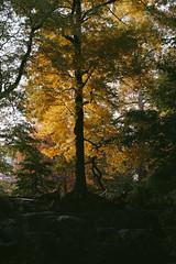 Central Park, NYC (instagram.com/lanolan) Tags: autumn centralpark color day fall fuji fujifilm fujifilmxpro2 manhattan newyork newyorkcity newyorknewyork ny nyc outdoors outside park thebigapple trees xpro2