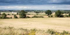 Nene valley in Northamptonshire (Joe Dunckley) Tags: eastnorthamptonshire sunny landscape nature greatbritain arable eastmidlands midlands hill agriculture summer crop farmland field farming northamptonshire farm england nenevalley uk tansorwold britain british english unitedkingdom
