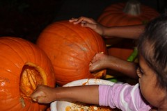 Cleaning out the pumpkins (cynthiarobb) Tags: