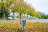 落ち葉④ (Theojiro) Tags: 10月 fujifilmxt2 fujifilm fujinon proneghi xf35mmf2rwr テオ 単焦点レンズ 撮って出し 曇り 秋 落ち葉 長野運動公園 駐車場
