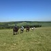 """Horse Trail Ride in Transylvania (2) • <a style=""""font-size:0.8em;"""" href=""""http://www.flickr.com/photos/131242750@N08/37973529311/"""" target=""""_blank"""">View on Flickr</a>"""