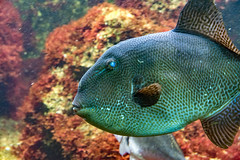 DSC_0536.jpg (karlheinz klingbeil) Tags: fisch aquarium fish germany tierpark tier wilhelma zoo animal