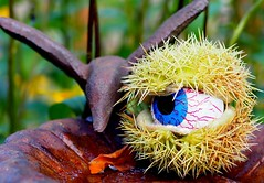 MM Halloween, a candy a day keeps the monsters away! (chris p-w) Tags: macromondays haloween scary trickortreat eyeball october 2017 eerie spooky