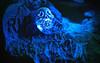 Rest In Peace (ertolima) Tags: tombstone skull macro spooky macromondays halloween rip restinpeace creepy hmm