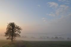 Herbstmorgen (Uli He - Fotofee) Tags: ulrike ulrikehe uli ulihe ulrikehergert hergert burghaun nikon nikond90 fotofee plätzer meinweg nebel november morgensonne sonne sonnenlicht warmeslicht sonnenschein bäume feld felder licht schatten