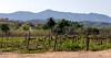Calitzdorp, Western Cape, South Africa (caroline_little) Tags: calitzdorp westerncape southafrica rubyport