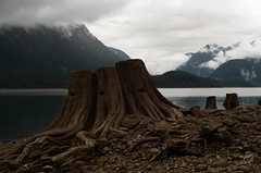 Underwater (Kristian Francke) Tags: lake pentax drained tree stump landscape outdoors cloud mountain nature roots
