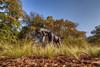 Parc de la Tête d'Or - Lyon (David Delache) Tags: lyon auvergnerhônealpes france girafe parcdelatêtedor damiencolcombet bronze