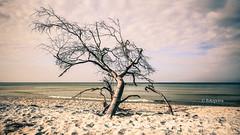 Ich richte mich nach dem Wind (petra.foto busy busy busy) Tags: fotopetra canon 5dmarkiii ostsee strand fischland dars natur meer wasser wellen mecklenburgvorpommern
