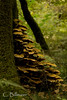 _MG_7770 (Cintia Billmaier.) Tags: setas hongos liquenes ucieda naturaleza verde color pilze mushroom arboles baum bäumen natur nature cantabria kantabrien paisaje reservanatural cantabriainfinita