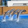 DSC_1494.jpg (albtormar1) Tags: artes concreto agua ciencias mundomarino félixcandela seaworld oceanografic ciudaddelasartesylasciencas hormigón valencia delfín españa arquitectura