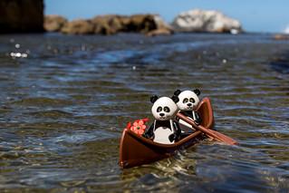 Pandas on a boat