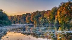 ♥ I love autumn! ♥ (.: mike   MKvip Beauty :.) Tags: sony⍺6500 sonyilce6500 sonyalpha6500 sonyalpha sony alpha emount ⍺6500 ilce6500 primelens prime manuallens manualondigital manualfocusing manualexposure manual samyang35mmf14asumc samyang35mmƒ14edasumc samyang 35mm ƒ14 aspherical commliteautofocusadapteref commlite efnex eftoemount handheld availablelight naturallight dreamy soft zen nature green orange yellow water lake reflections sunset hdr autumn fall jockgrim germany europe mth mkvip commliteautofocusadapterefnex ngc npc