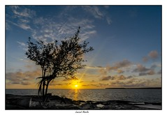 Un arbre (Laurent Asselin) Tags: arbre paysage sunrise leverdesoleil soleil aube couleurs lumières rayons orange ciel nuages eau mer océan kourou guyane