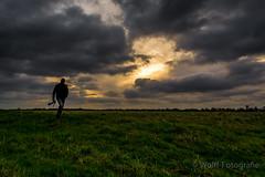 Schieveense polder