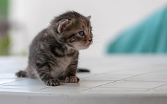 Kitty (04) (Vlado Ferenčić) Tags: kitty kittens catsdogs cats vladoferencic animals animalplanet vladimirferencic hrvatska podravina croatia nikond90 nikkor8020028