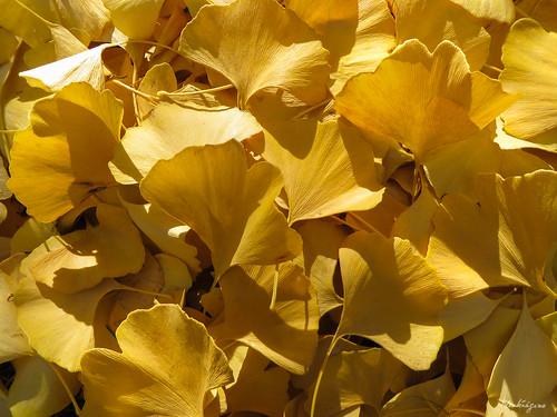 Autumn  Carpet - Tapis d'automne