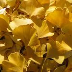 Autumn  Carpet - Tapis d'automne thumbnail