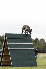 TB0A4817 (templeinmn) Tags: 2017 fall ipo mvsv schutzhund trial