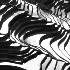 on a rainy day (sculptorli) Tags: terraces yuanyang yunnan abstract rain rice minimalism simplicity blackandwhite china abstraction riceteraces landscape yi yivillage yiminority rainyday 梯田 水稻梯田 元阳 云南 抽象 黑白 雨 reflection