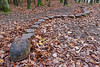 The snake (Michal Hajek) Tags: nikon d5500 sigma1020mm czphoto czechrepublic nature woodenart