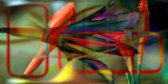 Agapantos (seguicollar) Tags: agapantos flor flower imagencreativa photomanipulación art arte artecreativo artedigital virginiaseguí montaje combinado color colorido brillante red amarillo rojo yellow