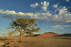 Namib desert (clasch) Tags: africa nikkor nikon d7000 landscape nature dune namib desert sand orange sesriem sossusvlei national park 1224 namibia tree naukluft blue clouds
