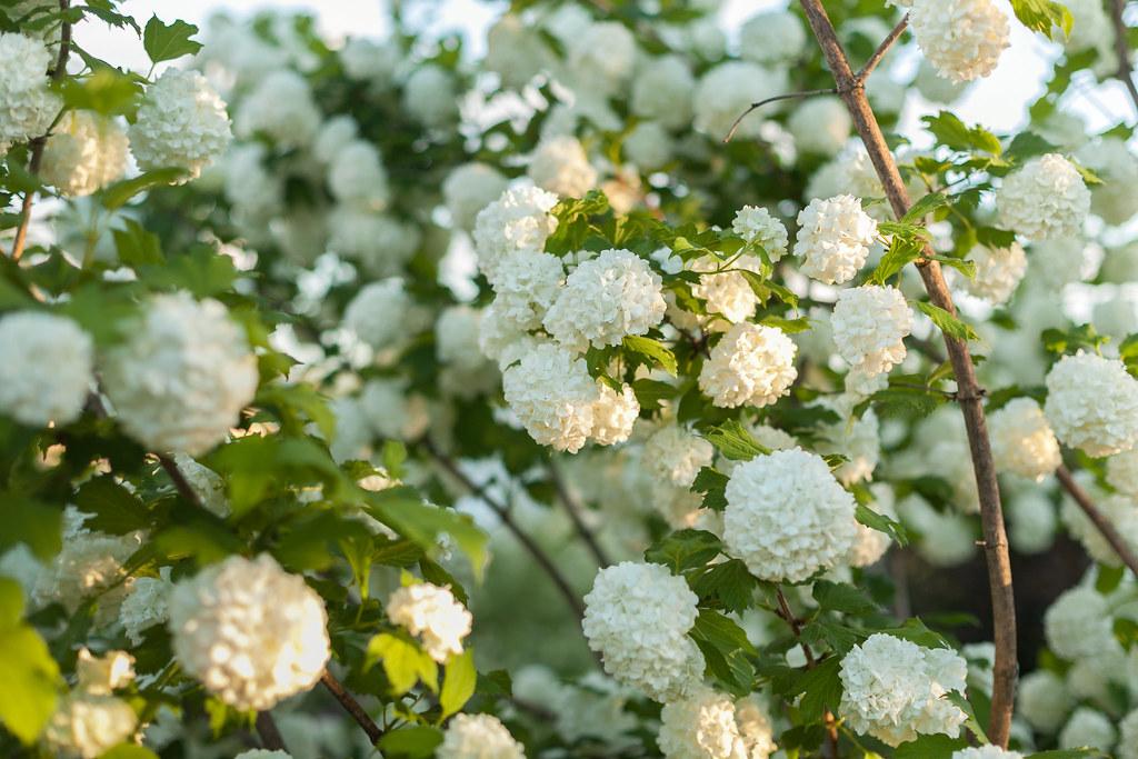 фото: Цветы